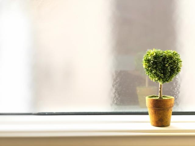 窓際に置かれた小さな植木鉢